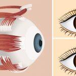 5 תרגילי יוגה קלים ופשוטים לשיפור הראייה