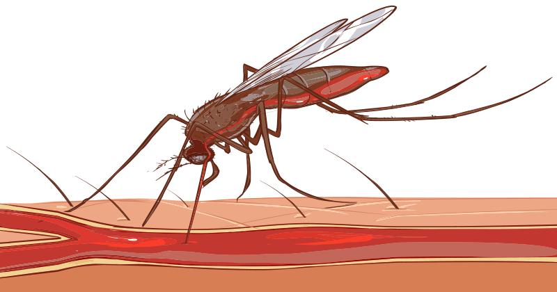 עקיצות יתושים