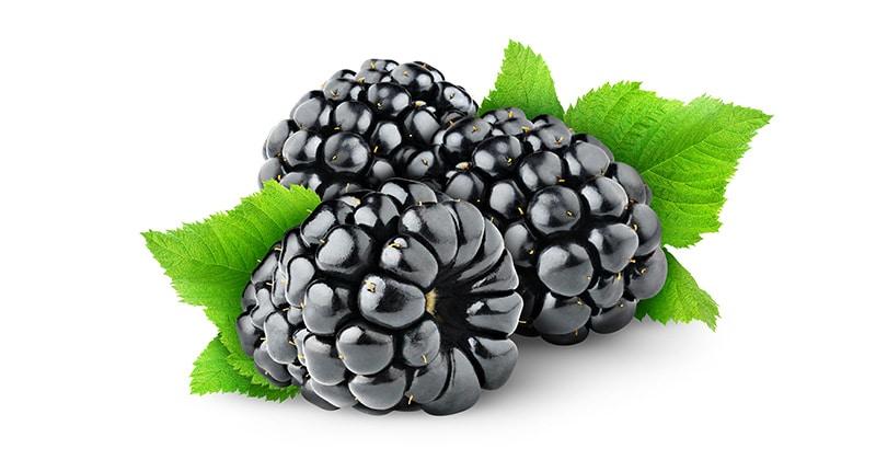 פטל שחור