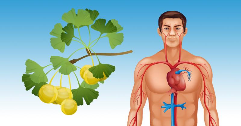 16 דרכים טבעיות ופשוטות לשיפור זרימת הדם