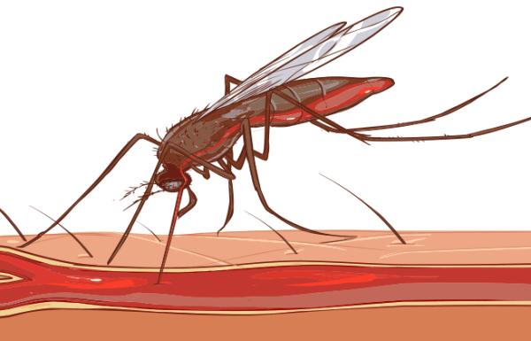 עקיצות יתושים, תרופות טבעיות להקלה מיידית