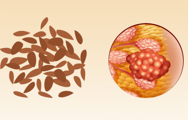 עובדה 1 חשובה מאוד, שלא ידעתם על זרעי פשתן