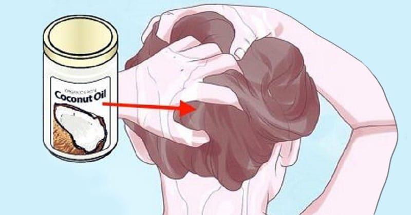 5 עובדות שלא ידעתם על שמן קוקוס לטיפוח השיער