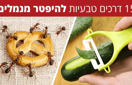 15 דרכים טבעיות ויעילות להיפטר מנמלים