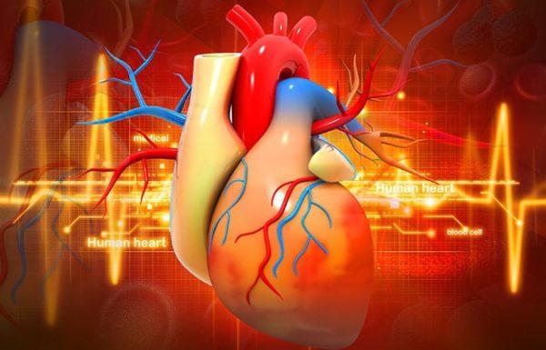 6 עובדות עוצרות נשימה ומעוררות התפעלות על לב האדם